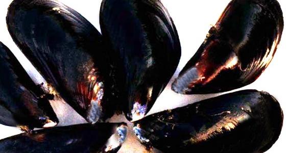 Procédure d'enquête publique sur le projet d'expérimentation d'un élevage de moules en eaux profondes