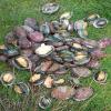 Côtes d'Armor : Opération de contrôle pêche à pied