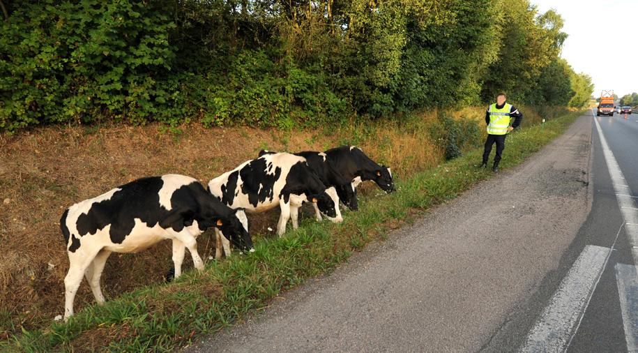 Vaches-4-S