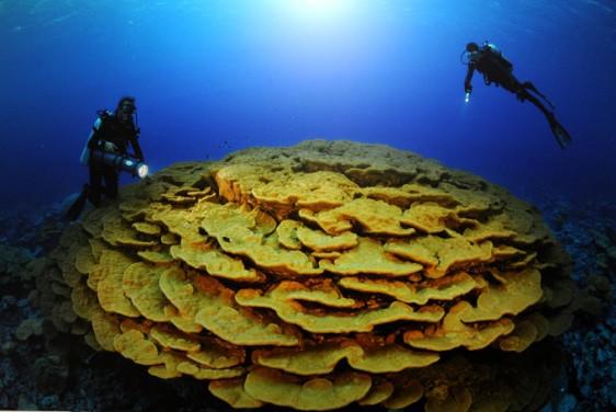 biolog-corail